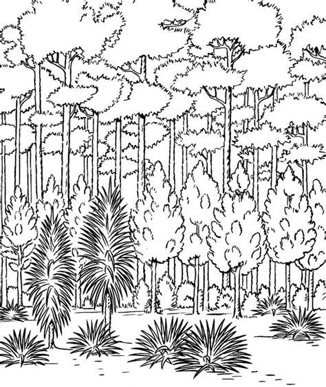 Dibujos Para Colorear De Bosques Cantineoqueteveo