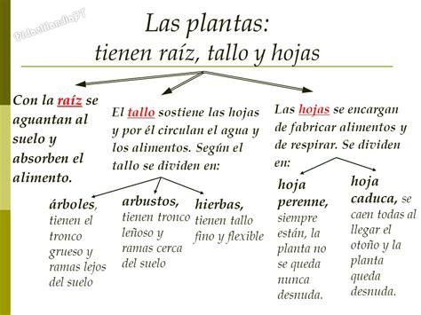 DidactilandiaPT Las Plantas Tema 4 - C.M. 5º Primaria ...