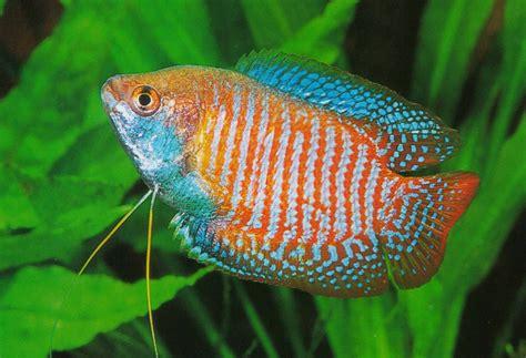 Die Schönsten Top 10 Aquarium Fische   YouTube