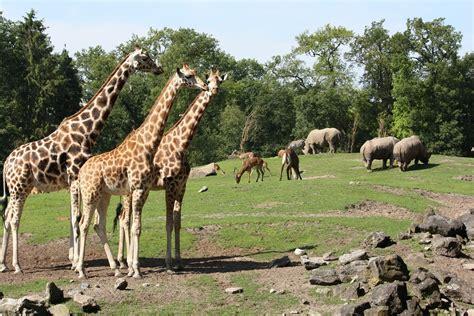 Dierenpark Emmen– Visit Emmen's Largest Zoo   Netherlands ...