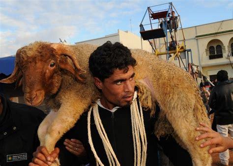 Diez mil corderos entraron ilegalmente desde Marruecos a ...