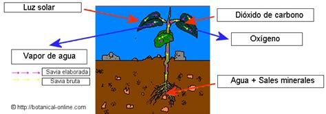 Diferencias entre animales y plantas