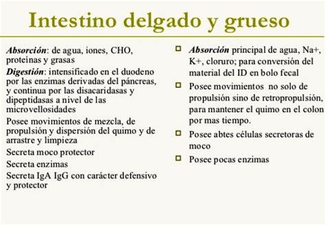 Diferencias entre el intestino delgado y el grueso ...