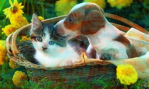Diferentes Imágenes para Perfil facebook de Perros y Gatos ...