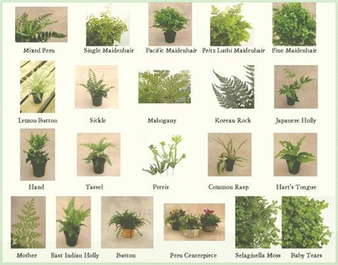 Diferentes plantas de la hiedra, diferentes tipos de ...