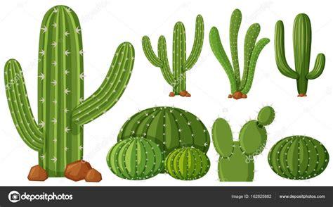 Diferentes tipos de plantas de cactus — Archivo Imágenes ...