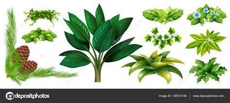 Diferentes tipos de plantas — Archivo Imágenes Vectoriales ...