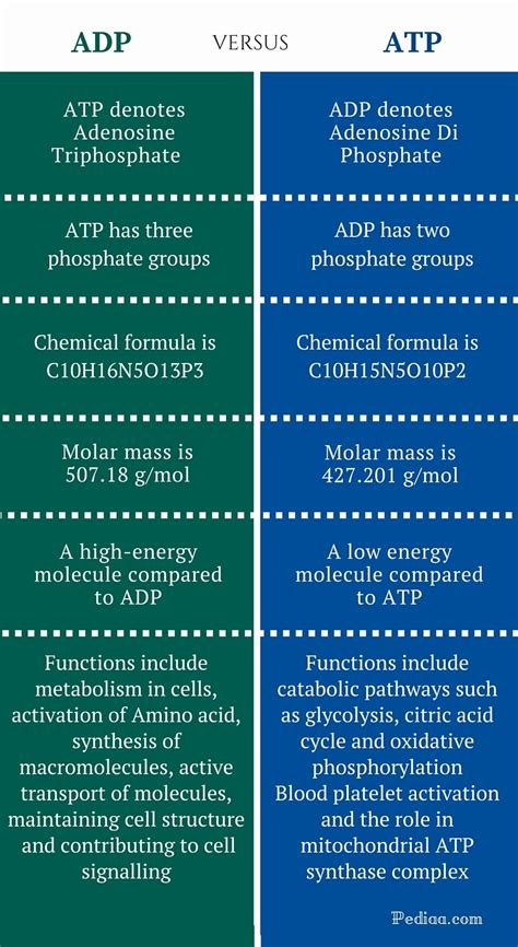 Difference Between ADP and ATP | Comparison of Physical ...