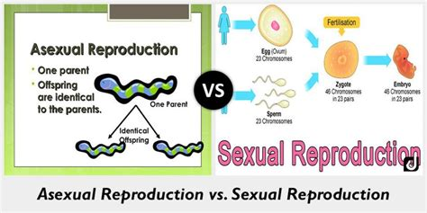 Difference between Asexual and Sexual Reproduction