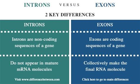 Difference Between Introns and Exons | Introns vs Exons