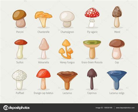 Different kinds of mushrooms — Stock Vector © Saenko ...