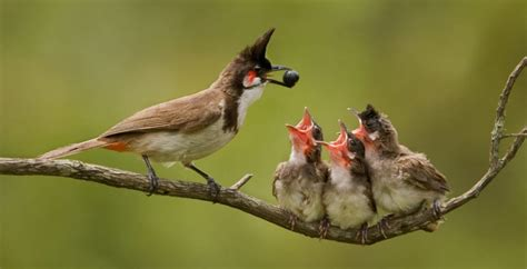Different Types of Birds | Learn About Birds