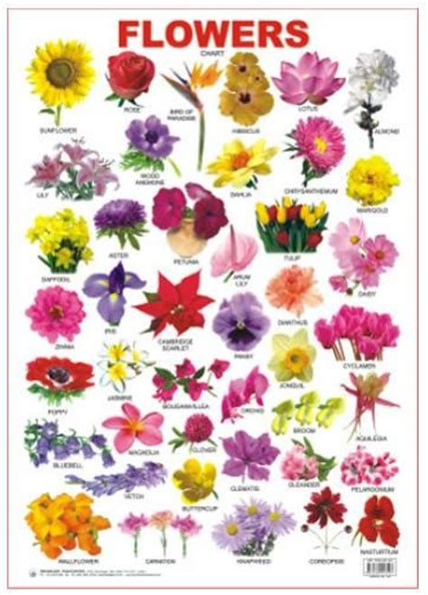 Different Types Of Flowers With Names Chart | www.imgkid ...
