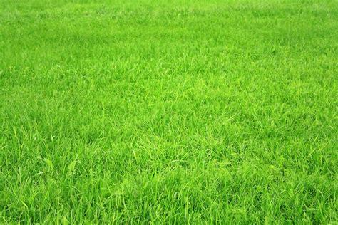 DinoRank está muy verde