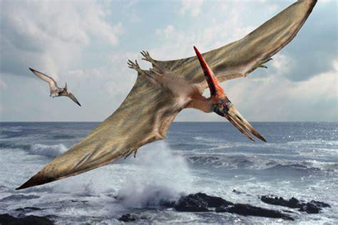 Dinosaur Art: Pteranodon
