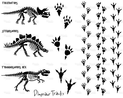 Dinosaur skeletons and foot prints. All elements are ...