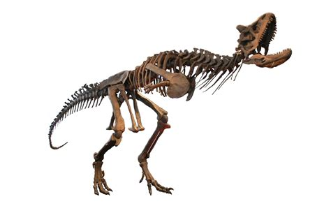 Dinosauria Wikipedia | Autos Post
