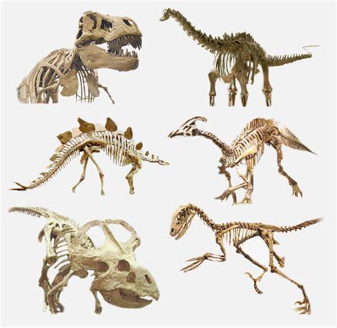 Dinosauria   Wiktionary