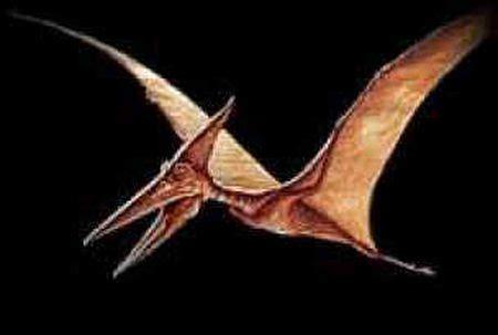 Dinosaurio Pterodactilo   Taringa!