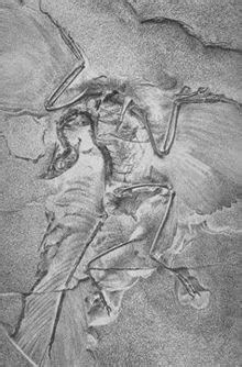 Dinosaurios con plumas - Wikipedia, la enciclopedia libre