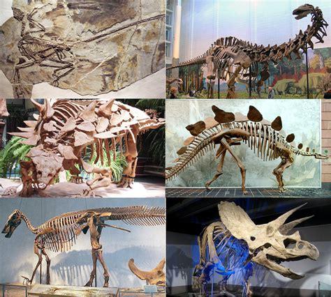 Dinosaurus - Wikipedia bahasa Indonesia, ensiklopedia bebas