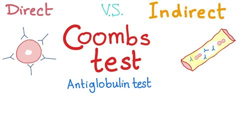 Direct Vs Indirect Coombs Test - YouTube