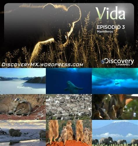 DiscoveryMX Documentales TV-Rip: [Discovery] VIDA - 03 ...