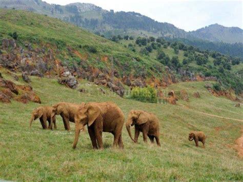 Disfrutar de los animales en el Parque de Cabárceno ...