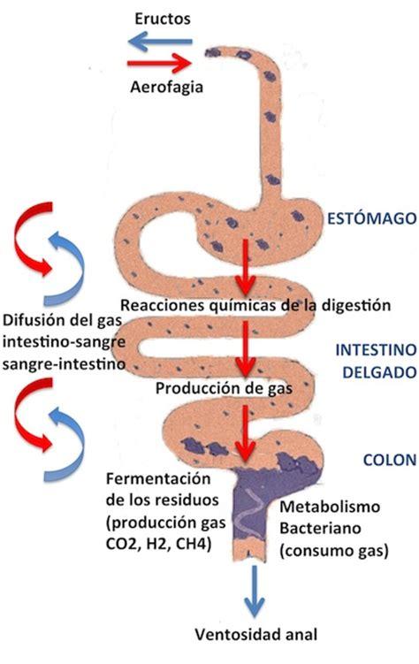 Distensión abdominal funcional | Exploraciones Digestivas ...