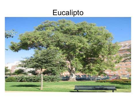Distintos tipos de árboles