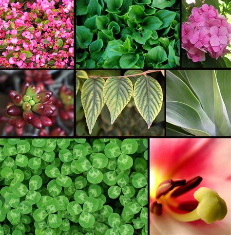 Diversidad vegetal