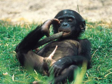 Divertidas imágenes de monos haciendo monerías