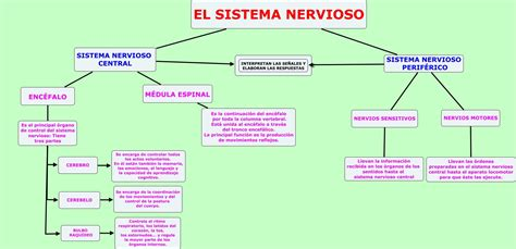 DOCENTECA   El sistema nervioso + cuestionario