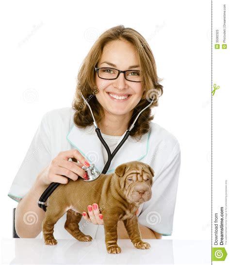 Doctor Veterinario Que Hace Un Chequeo De Un Perro De ...