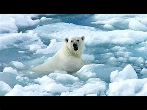 Documental de Animales Salvajes de Alaska   Documentales ...