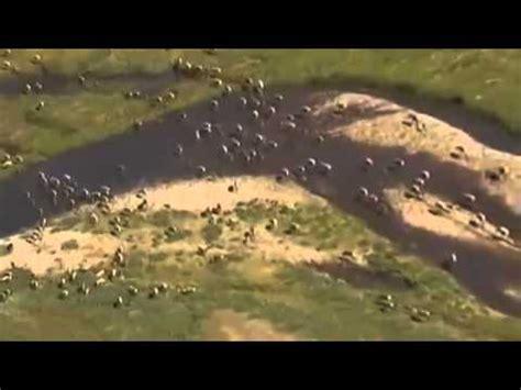Documental Oso Polar Oso Pardo Documental National ...