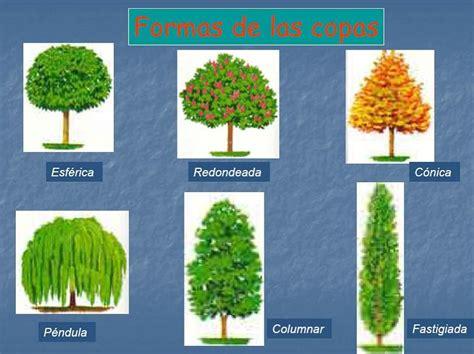 Documents and Settingsforestal1EscritorioNueva carpeta ...
