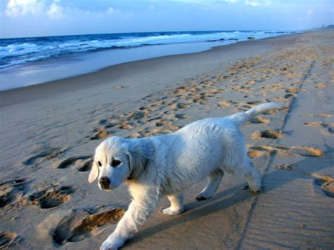 Doggy Beach | Las aventuras de Kitty
