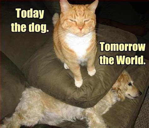 DOGS RULE CATS..........   Christian Chat Rooms & Forums