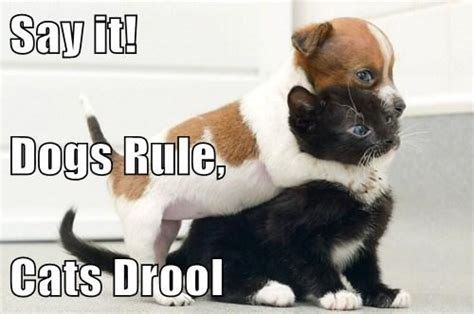 Dogs rule cats drule   ThingLink