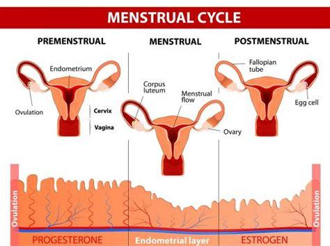 Dolor de cabeza durante la menstruación: causas y remedios ...