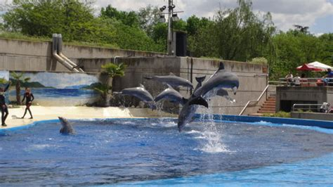 Dolphin Show at the Madrid Zoo   Picture of Zoo Aquarium ...