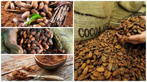 ¿Dónde Puedo Comprar Cacao Natural o Ecológico Online?【2018】