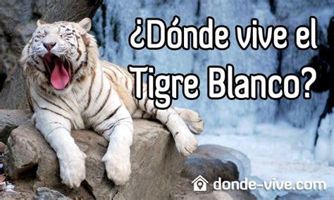 ¿Dónde vive el Tigre Blanco? | Donde Vive.com