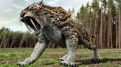 Donde Vive El Tigre Dientes De Sable?   Que Comen, Como Nacen