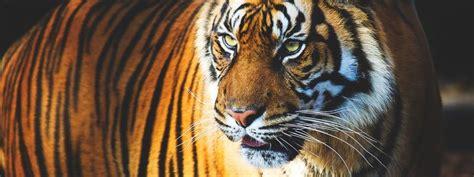 ¿Dónde vive el tigre?