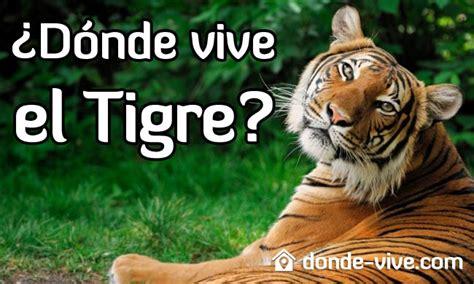 ¿Dónde vive el Tigre? | ¿Qué comen? | ¿Cuánto duran?