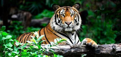 Donde Viven Los Tigres Related Keywords   Donde Viven Los ...