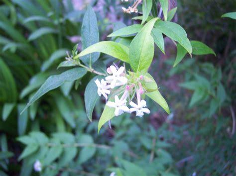 Dos arbustos ornamentales