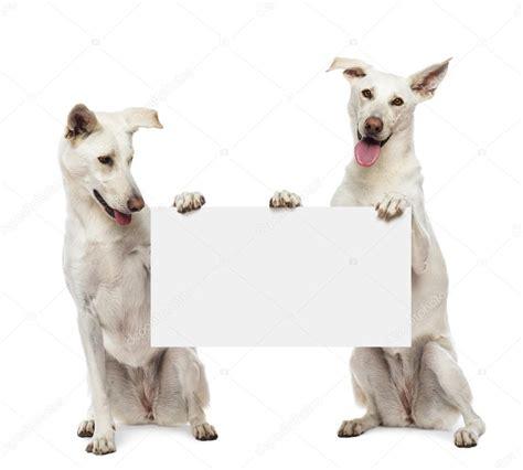 dos mestizos perros sentados y con cartel blanco contra ...